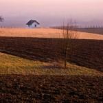 Blick aufs Bammerthüsli - Foto: Birgit-Cathrin Duval