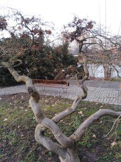 Ein erhaltener Teil des Parks